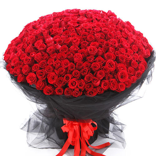 520朵玫瑰